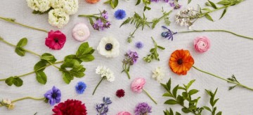 British-Flower-1x1-2-660x371